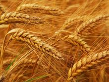 Ростовская область названа наиболее перспективным регионом-экспортёром российского зерна