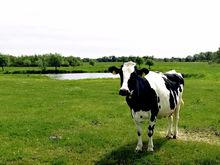 На трактор, животных, пчелоужаливание. Свердловским фермерам раздали 80 млн руб.