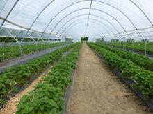 Агрокомплекс «Чурилово» построит теплицы в Курганской области
