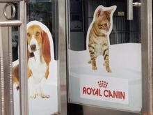 Как кибератака остановила производство корма для кошек и собак по всему миру