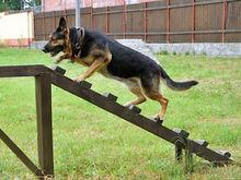 В Ростове в парке им. Островского создадут площадку для выгула собак
