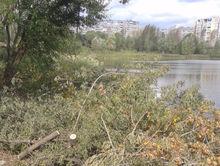 На территории Мещерского озера в Нижнем Новгороде началась массовая рубка деревьев