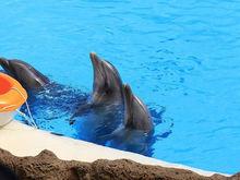 В Челябинской области могут закрыть бизнес контактных зоопарков и дельфинариев