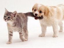 В России планируют ввести платную регистрацию домашних кошек и собак