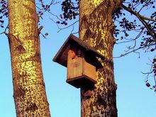 Почему вам нужен маленький дом