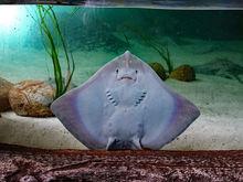В Челябинске выставку аквариумов с акулами и пираньями продают за 3 млн руб.