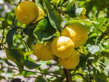 «Бизнес убыточен». В Челябинской области из-за долга в 3 млн распродают лимонарий