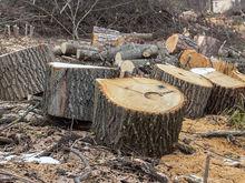 В Красноярском крае стало больше инвестпроектов в лесной отрасли