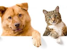 Жители ЮФО стали чаще заказывать товары для животных через Интернет