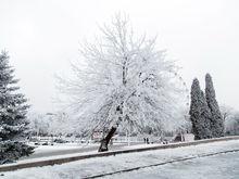 Долгожданный снег в Ростове может пойти уже на этой неделе