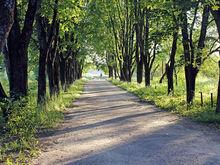 Мэрия отстаивает право на создание двух скверов в Новосибирске и Академгородке