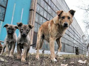 Донские власти рассказали об усыплении и стерилизации бездомных животных