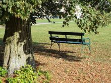 Мэрия отменила аукцион на аренду земли под парк «Сосновый бор»