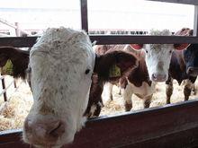Власти Ростовской области решили сделать ставку на фермеров