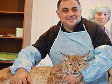 В Челябинске бизнесмен требует миллион рублей с Карена Даллакяна