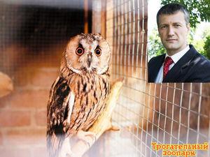 Ростовский предприниматель может перевезти контактные зоопарки за границу