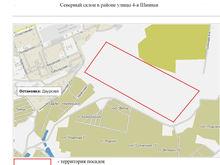 В Красноярске начнется компенсационная посадка деревьев у объектов Универсиады