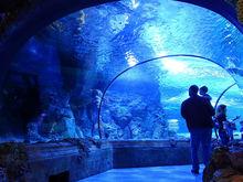 В Нижегородской области на строительство океанариума необходимо 7 млрд руб.