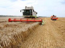 Власти Ростовской области рассчитывают на урожай в 10 млн тонн зерна