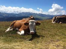 «Проблему сейчас не решить». Казахстан запретил ввозить скот из Челябинской области