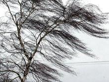 В Ростове из-за усиления ветра объявили штормовое предупреждение