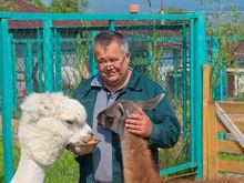 Директор красноярского «Роева Ручья» отказался от мандата депутата Горсовета