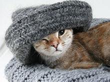 Через неделю в квартиры новосибирцев подадут тепло
