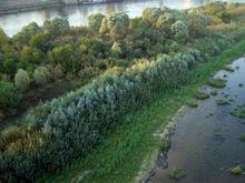 Музей, парк или пляж. В Нижнем Новгороде определят судьбу «Гребневских песков»