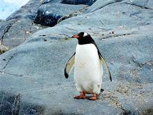 Нижегородский зоопарк выиграл грант. Деньги пойдут на строительство пингвинария