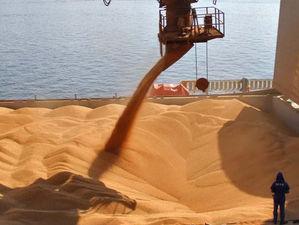 В Ростовской области могут приостановить отгрузку зерна на экспорт