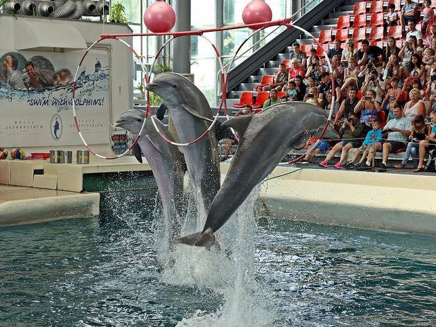 Белухи и дельфины. В Екатеринбурге откроют один из крупнейших океанариумов в России