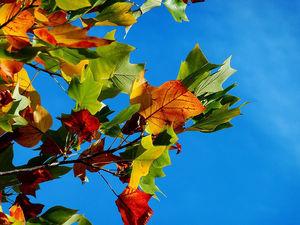 Погода в Ростове: прогноз на выходные 6-7 октября