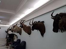 Коллекцию трофеев заядлого охотника Валерия Язева выставили на продажу