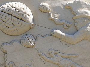 «После 20 лет нейроны отмирают и вы начинаете глупеть? Это чушь». Главные мифы о мозге