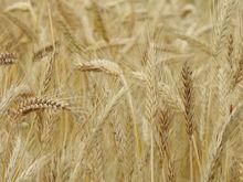 В Красноярском крае предложено ввести «нулевой» тариф на вывоз зерна по железной дороге
