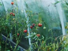 Полмиллиона рублей штрафов получили новосибирские тепличные хозяйства