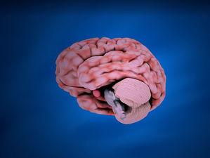 Вредные полезные привычки: почему бег и перекус могут вредить работе мозга