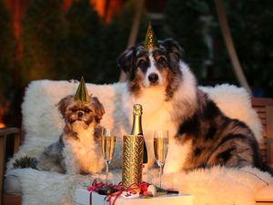 Новый год — сплошной стресс. Как спасти себя от огромного количества дел, еды и алкоголя