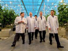 3 млрд рублей на огурцы. В Екатеринбурге запущено новое тепличное хозяйство