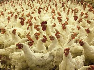 «До свидания!» На «Челябинскую птицефабрику» нагрянул рейд сотрудников ФСБ