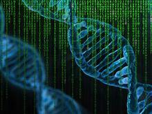 В Институте цитологии и генетики готов проект центра генетических технологий
