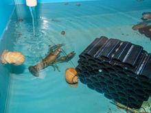 Исследовательский центр аквакультуры появился в Новосибирске