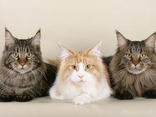 Для сильных и независимых: сколько котиков можно купить, продав квартиру в Челябинске