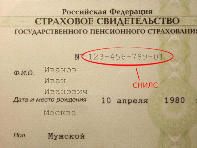 В России отменили бумажные СНИЛС. Теперь они будут только в электронном виде