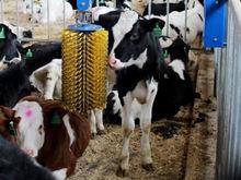 «МолСиб» и Россельхозбанк разработали меры поддержки молочных предприятий