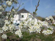 Дорогое удовольствие. Цены на загородное жилье в Нижегородской области выросли почти на 5%