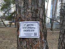 «Это как можно?! В голове не укладывается». Как будут убивать парк «Зеленая роща» / МНЕНИЯ