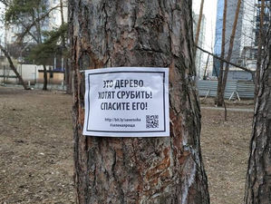 Мэрия взялась за благоустройство зеленых зон. На два парка потратят 50 млн руб.