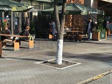 В Челябинске приостановили побелку деревьев. «Не знаю, чьи пережитки»