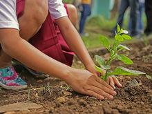 В Нижегородской области посадили более 800 тыс. деревьев